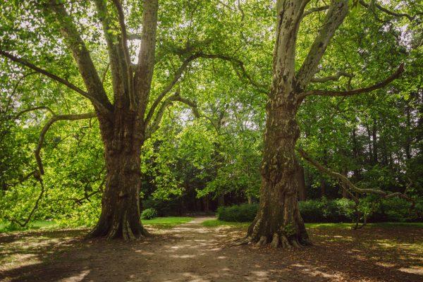Kasteelpark_landgoed_kasteel_geldrop-2